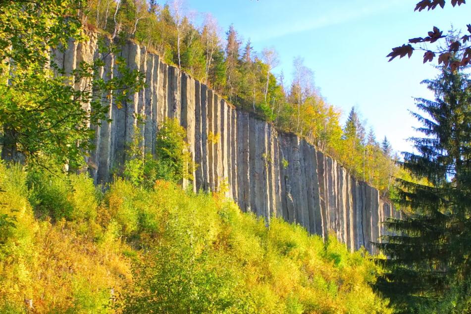 Der Scheibenberg ist vor allem für seine bis zu 30 Meter hohen Basaltsäulen bekannt.