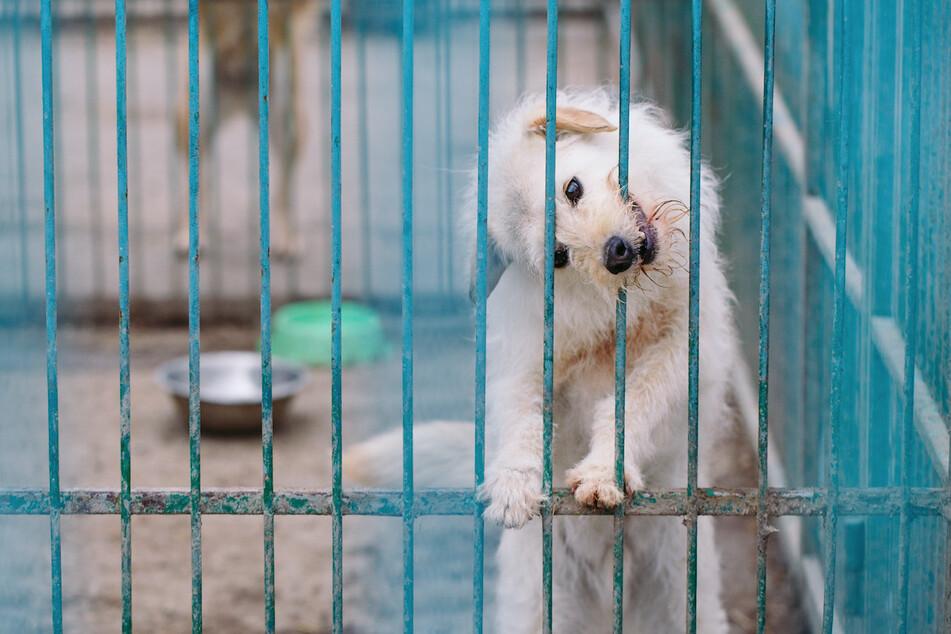Hundehandel-Warnung: Vorsicht vor unseriösen Angeboten im Internet