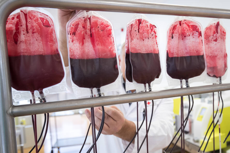 Ein Mitarbeiter hängt in der Herstellungsabteilung des DRK-Blutspendedienst Nord-Ost Beutel mit Blutspenden zur Filtration auf. (Archivbild)