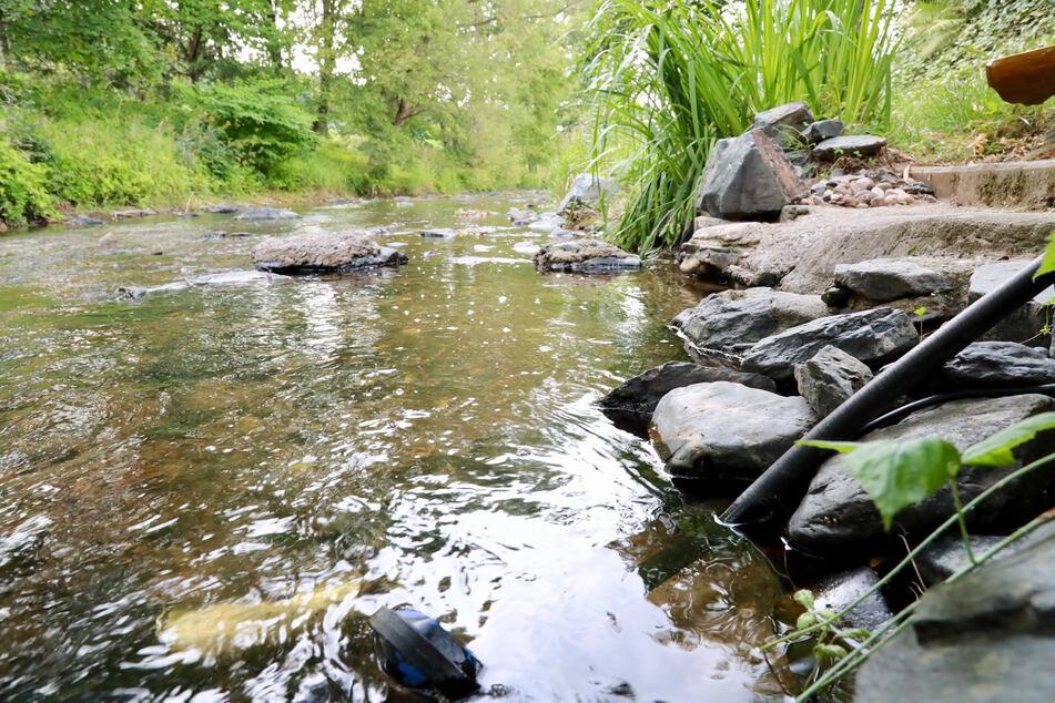 Unsere Bäche und Flüsse drohen auszutrocknen. Der Landkreis Zwickau verbietet jetzt das Abpumpen von Wasser.