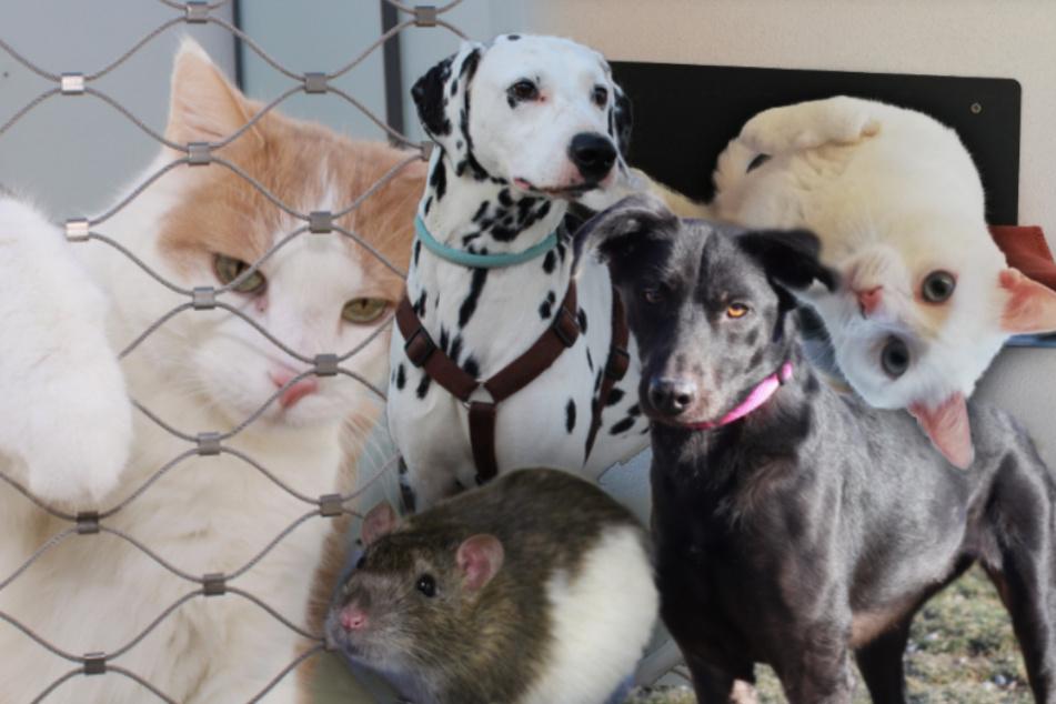 5 besondere Tiere: Diese Hunde, Katzen und Ratten suchen ein Zuhause