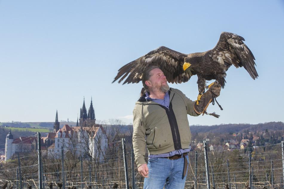 Falkner Hans-Peter Schaaf mit Riesenseeadler Stella.
