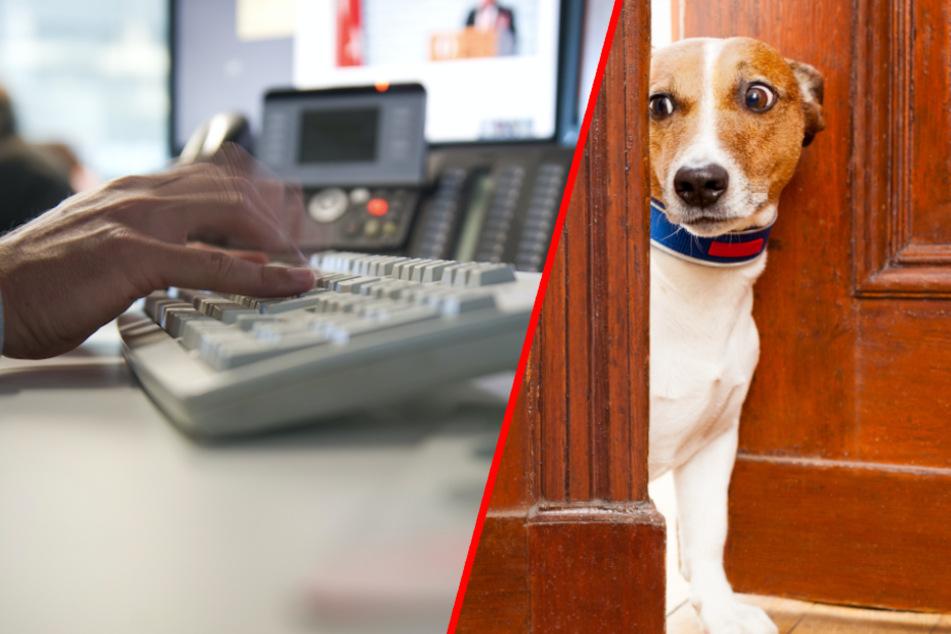 Hund im Büro? Hier lauern überall tödliche Gefahren für Tiere
