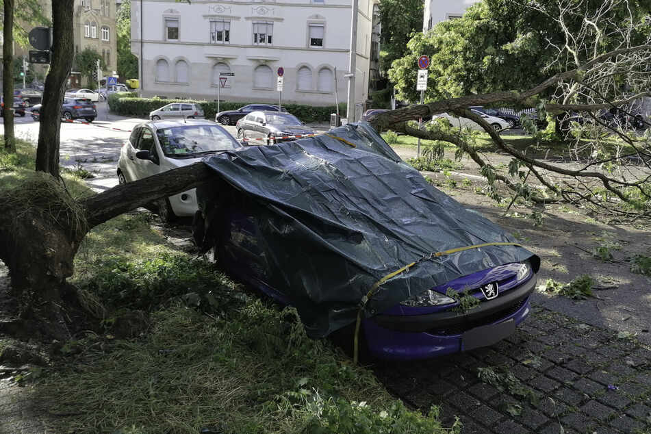 In der Stuttgarter Schickhardtstraße ist ein Baum auf ein Auto gestürzt.