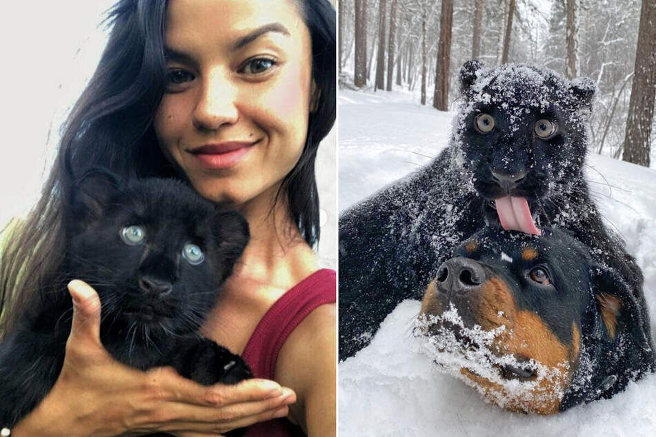 Panther and pooch become best pals in a real-life Disney fairy tale!