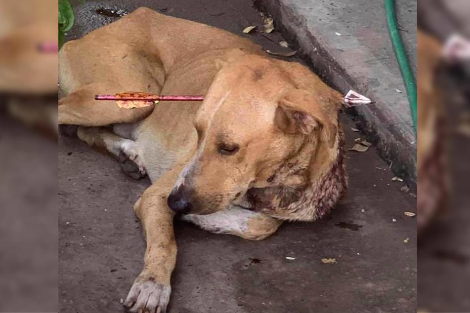 Der Hund wurde vermutlich als Zielscheibe genutzt.