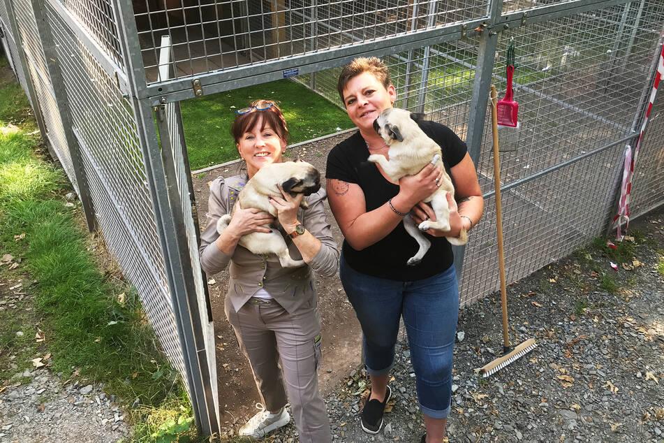 Regina Barthel-Marr (l.) und Tierheimleiterin Anja Witzmann halten jeweils einen der vier Möpse.