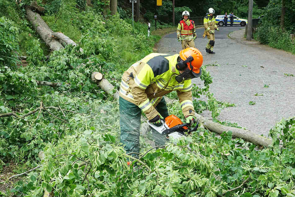 Erst als der Strom abgeschaltet wurde, konnten die Kameraden den Baum zersägen und beseitigen.