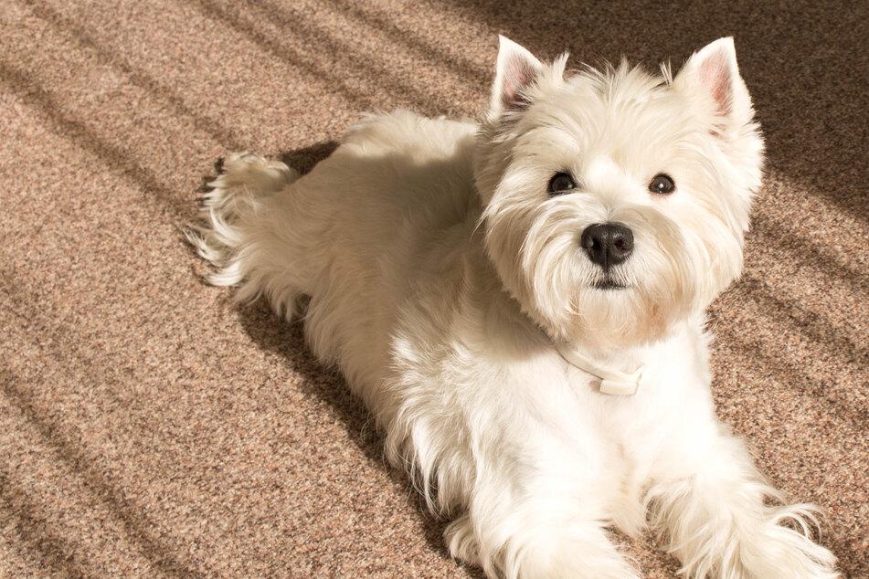 Besitzer brechen Hund das Herz und bringen ihn ins Tierheim: Der Grund ist bitter