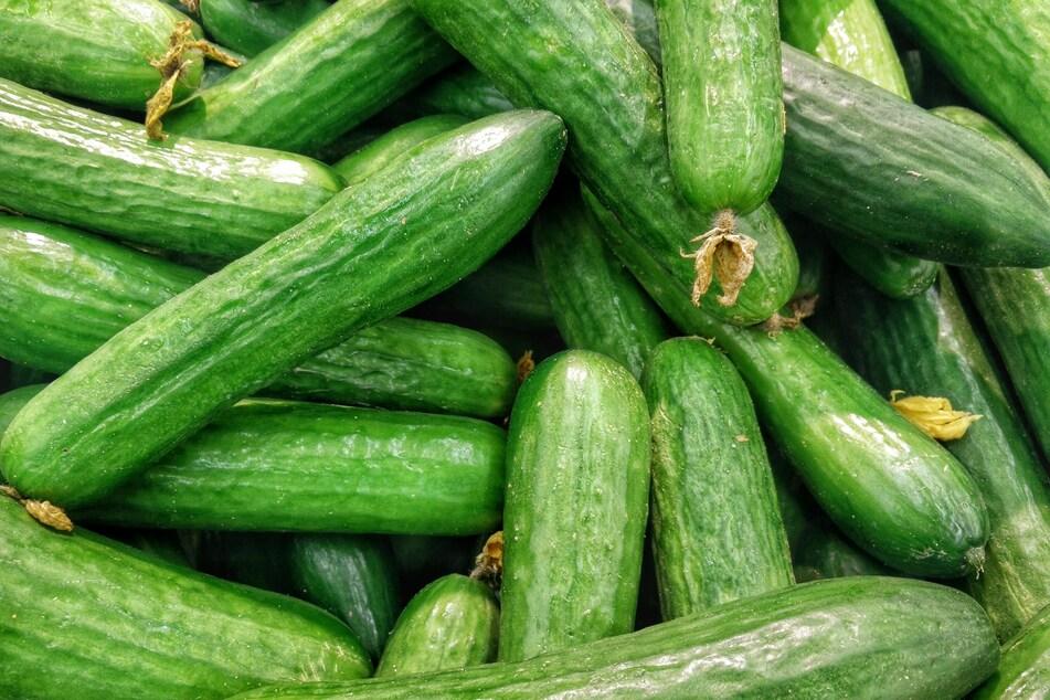 Gurken benötigen eine Rankhilfe sowie viel Wasser und Nährstoffe.