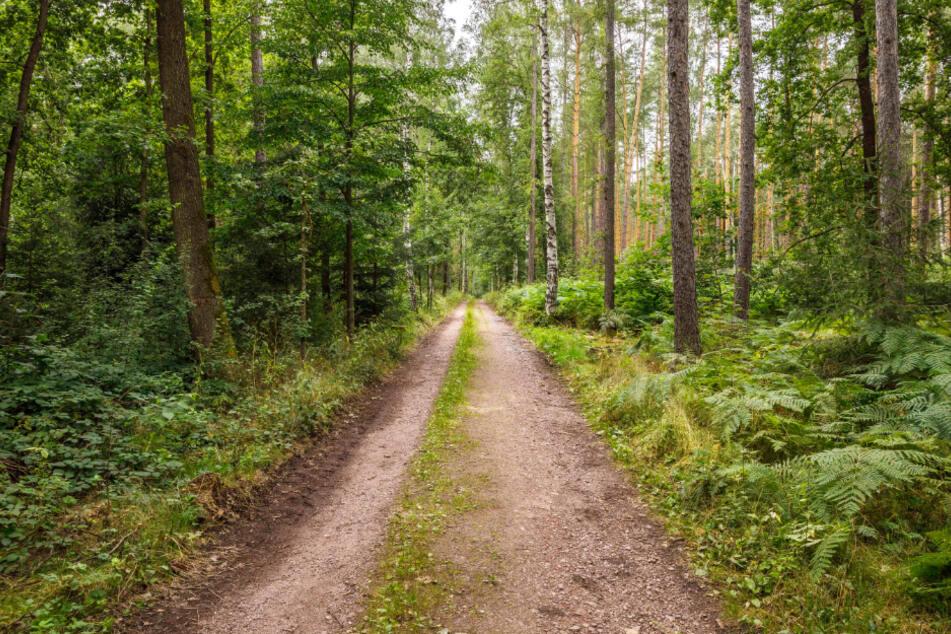 Bis zu 20 Hektar seines Waldes sollen zum Friedhof umfunktioniert werden.