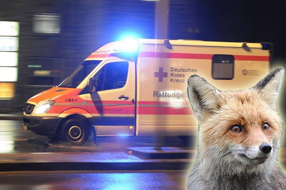 Fuchs ausgewichen - BMW-Fahrer schwer verletzt