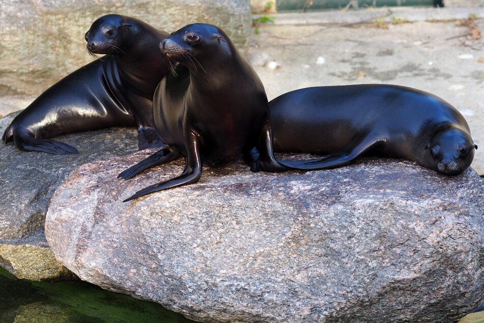 Erste Bewohner für das neue Feuerland im Zoo Leipzig: Wie süß sind die denn?