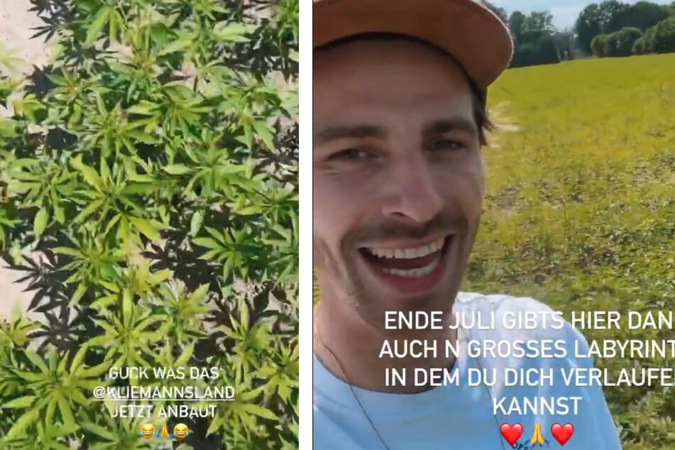 Fynn Kliemann (33) präsentiert stolz sein Hanffeld.