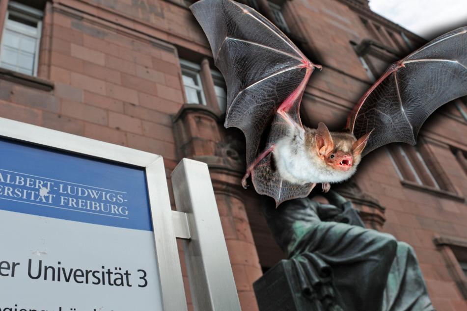 700 Fledermäuse sterben in Lüftung von Universität