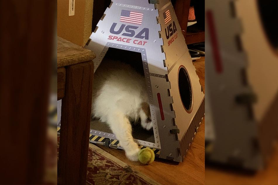 Ein ziemlich aufregender Ersatz: Ginger hat nun ihre eigene Raumkapsel!