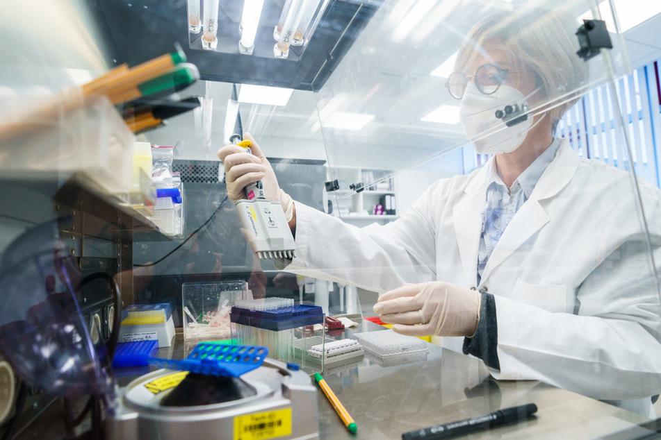 Im Labor werden Proben auf das Coronavirus untersucht.