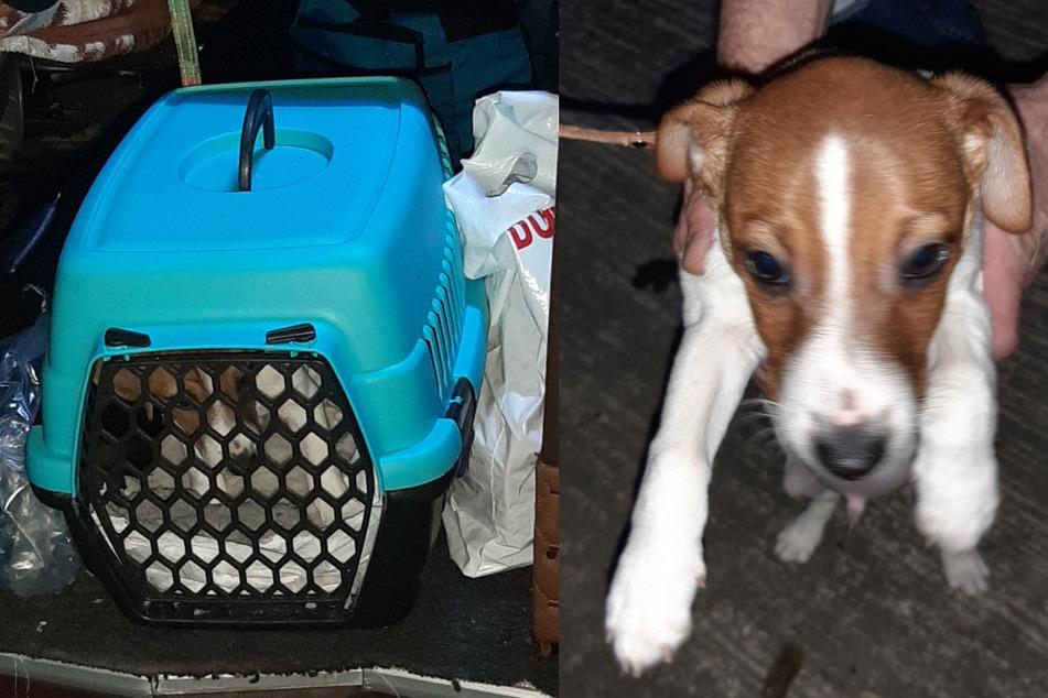 Hunde-Schmuggel: Zoll stoppt illegalen Welpen-Transport