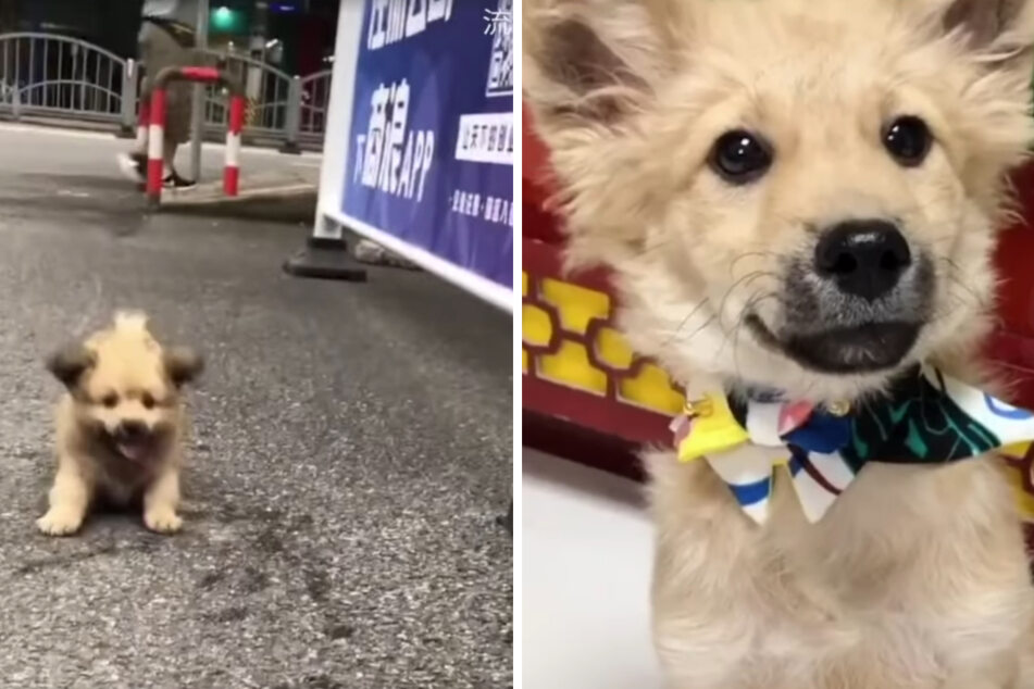 Tiny stray dog with a big heart gets rescued by caring passersby