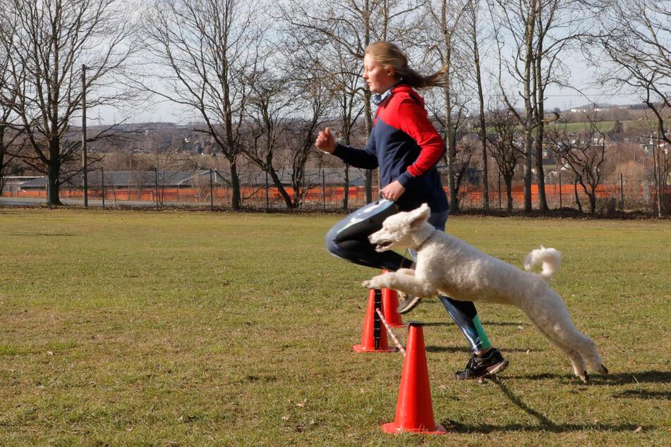 Chemnitz: So ein Hunde-Leben! Chemnitzer Verein leidet massiv unter Lockdown