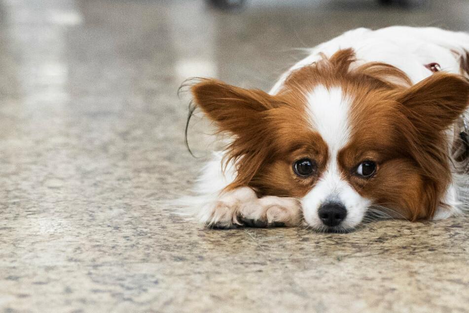 Markieren Hundediebe Häuser, bei denen sie sich später Vierbeiner schnappen wollen?