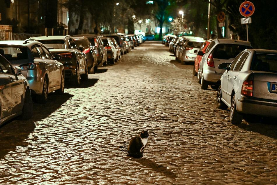 In aller Ruhe sitzt eine Katze am Abend kurz nach 22 Uhr auf dem Kopfsteinpflaster einer Straße in Karlshorst, in der zahlreiche Autos parken.