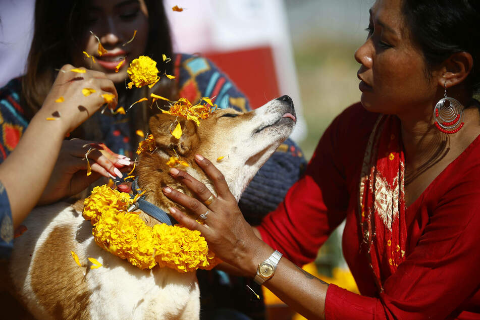 The Kukkur-Tihar is a day for pampering four-legged friends.
