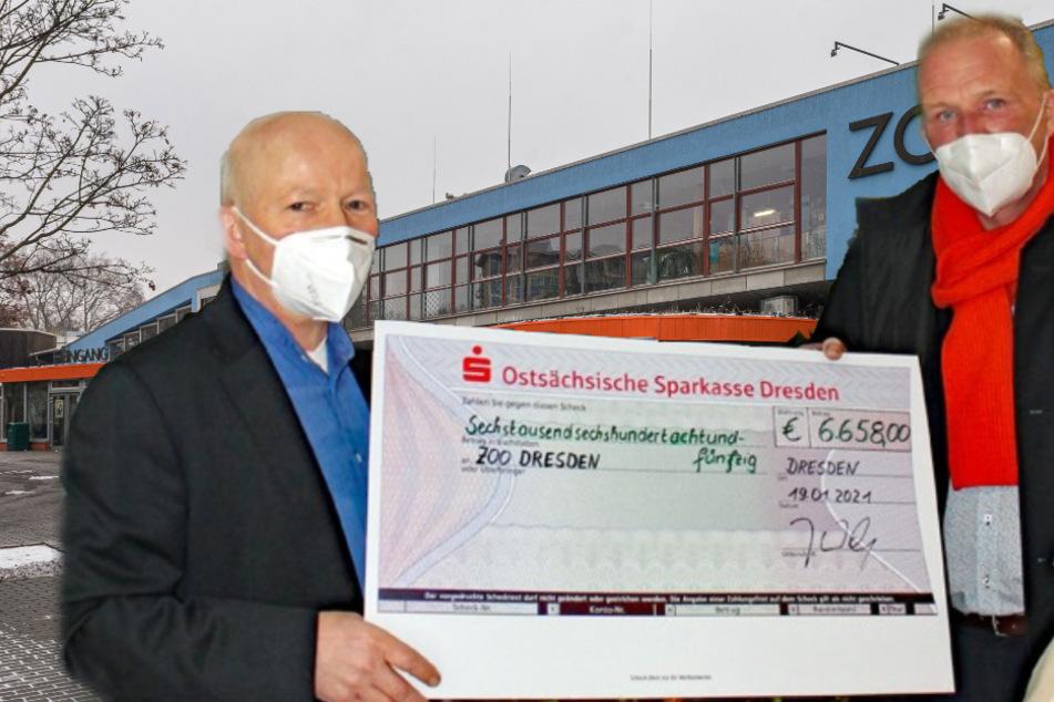 Spendenflut für den Dresdner Zoo: So viel Geld ist schon zusammengekommen