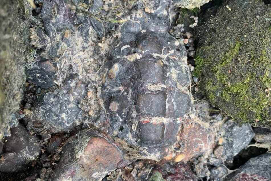 Schock-Fund! Spaziergänger entdeckt Granate in der Spree