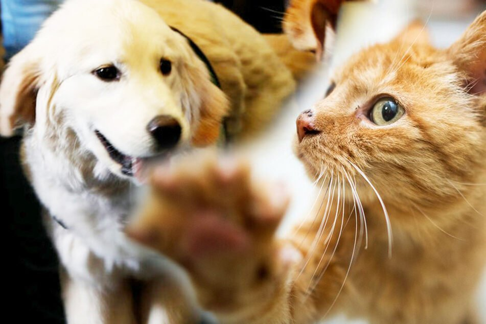 Hunde und Katzen können sich nachweislich bei Menschen mit dem neuartigen Coronavirus anstecken.