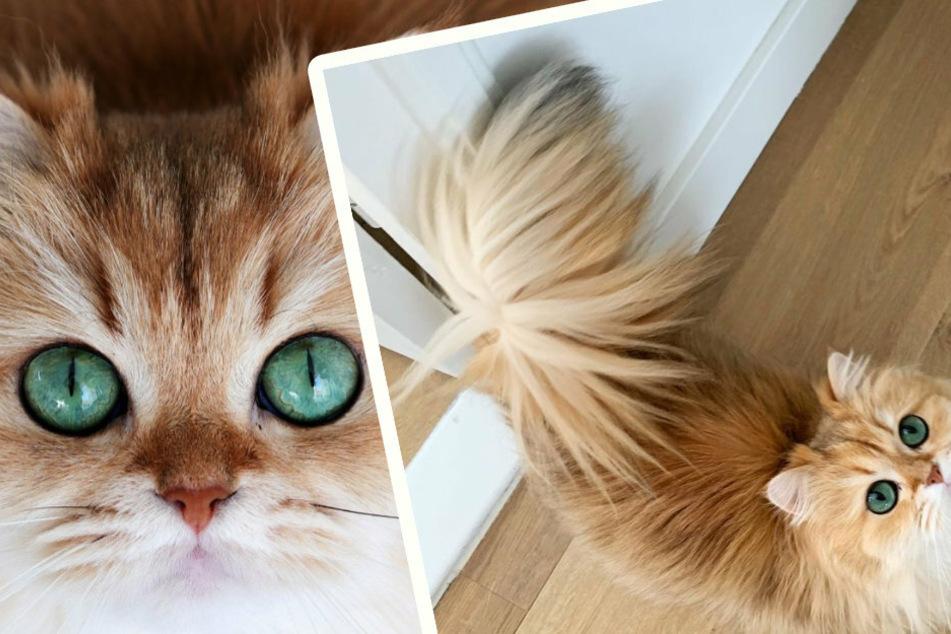 Die schöne Katze Smoothie wiegt nur rund 2,6 Kilogramm.