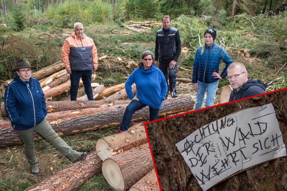 Dresden: Mit Nägeln Bäume retten: Harte Proteste gegen die Rodungen am Kieswerk
