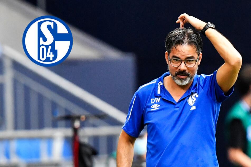 FC Schalke 04 versinkt in sportlicher Tristesse! Wagners Team wartet seit Anfang Februar auf Sieg!