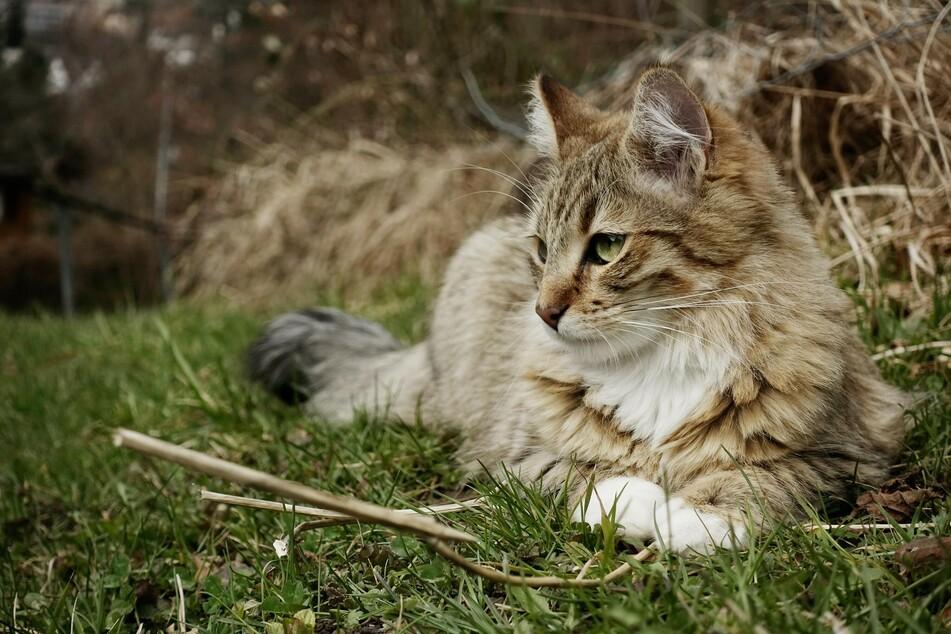Die meisten Katzen genießen den Aufenthalt in der Natur sehr.