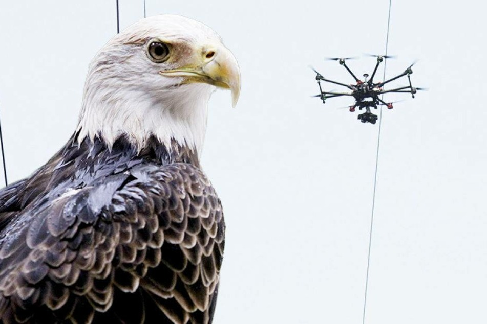 Dieser Adler holt Drohnen vom Himmel