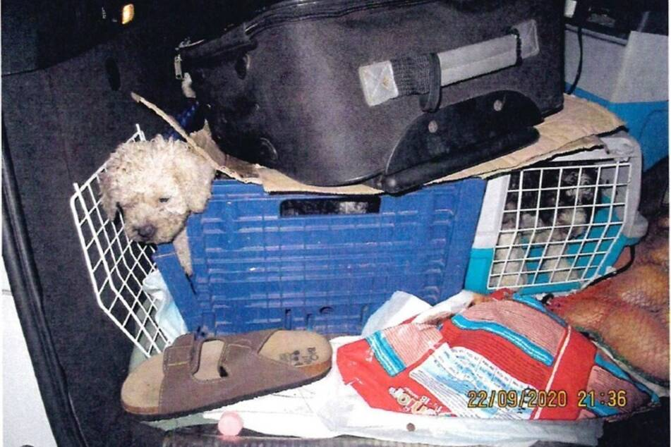 Die Hundewelpen waren in viel zu kleinen Kartons, Plastikkisten und Transportboxen untergebracht.