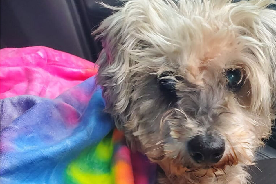 Family gets a call about their dog three years after it went missing