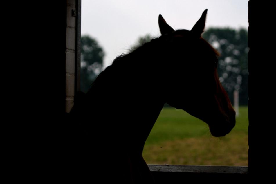 Trotz Reitbeteiligung: Halterin muss Gräfin Schadenersatz für Pferde-Tritt zahlen