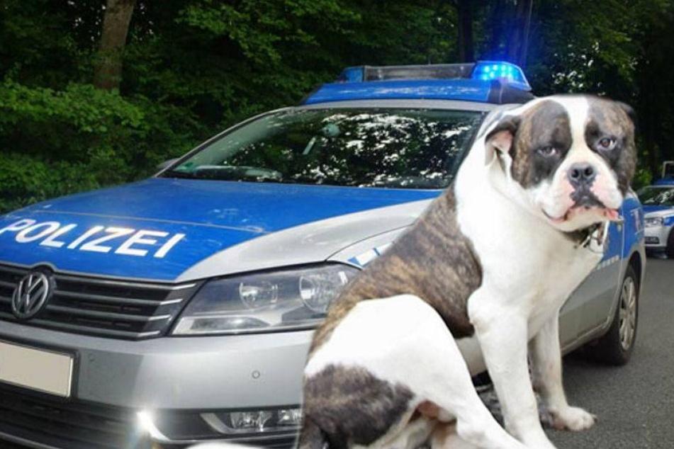 """Zivilistenhund """"Hartmann"""" schnappt Autodieb"""