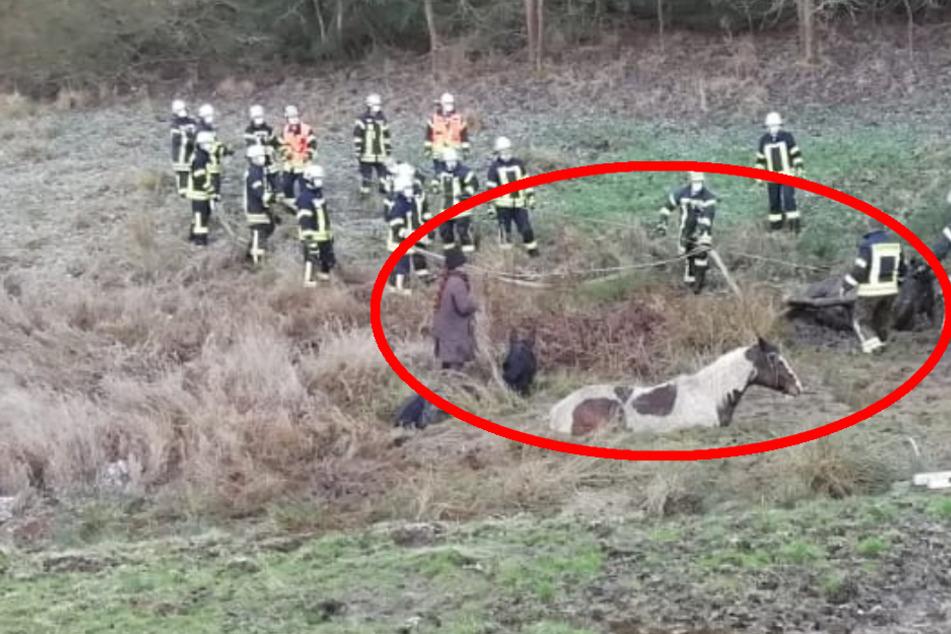 Entlaufene Pferde bleiben in Schlammloch stecken: Feuerwehr muss anrücken
