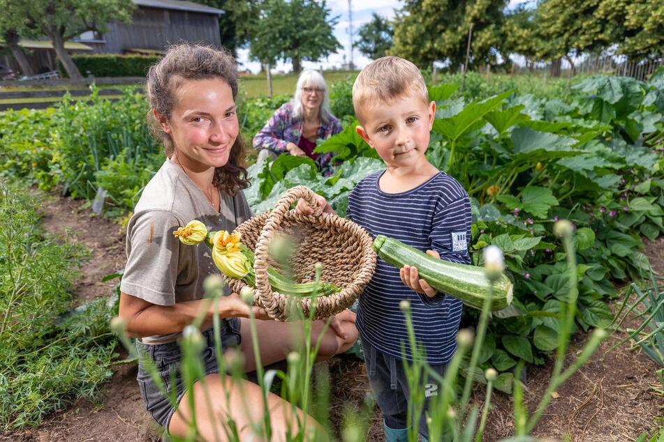 Bio-Gemüse vom Campingplatz: Saskia Wildenhain (31) und Sohn Adam (4) bei der Ernte.