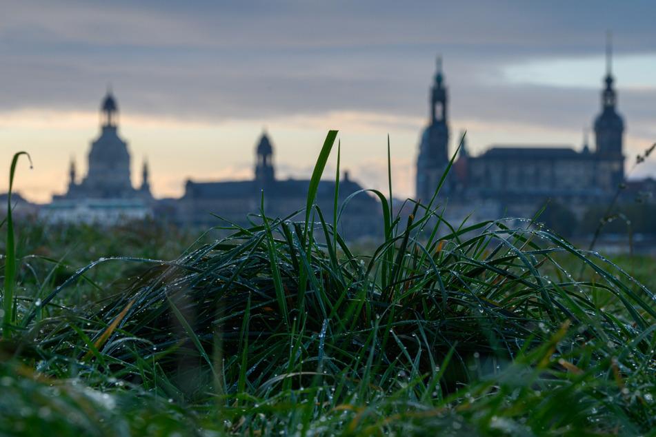 Mit Morgentau sind die Elbwiesen vor der Altstadtkulisse mit der Frauenkirche, dem Ständehaus und dem Hausmannsturm benetzt.