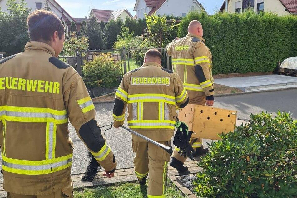 Die Freiwillige Feuerwehr Grimma kümmerte sich um das verirrte Tierchen.