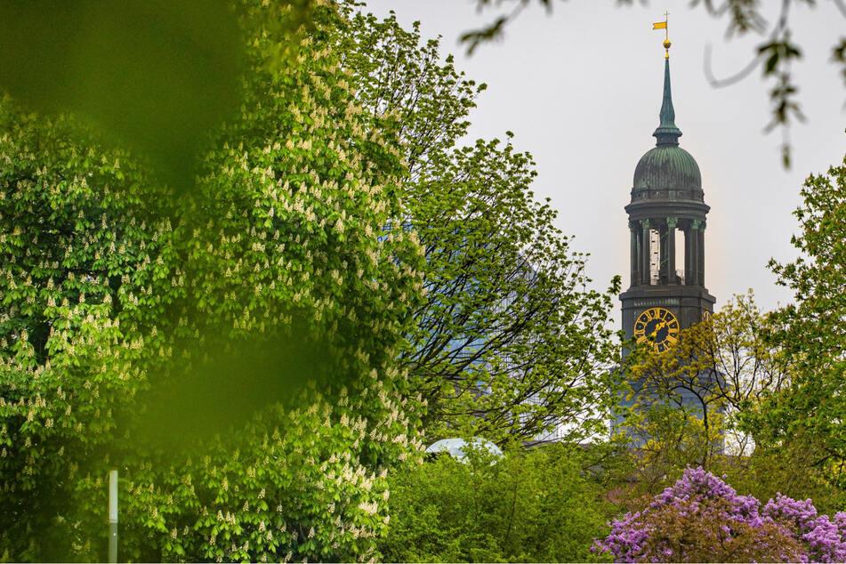 Hamburg: Open-Air-Gottesdienst am Michel zum Erntedank