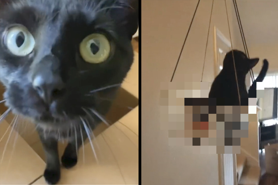Katze liebt die lustige Erfindung einer TikTok-Userin: Wo sitzt sie denn da drin?