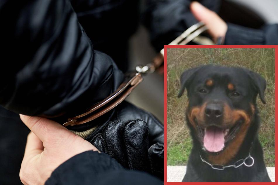 """In Essen hat Polizeihund """"Drago"""" in der Nacht zu Mittwoch einen mutmaßlichen Einbrecher (20) gestoppt. Zeugen hatten den Einbruch zuvor bemerkt und die Polizei alarmiert. (Symbolbild)"""