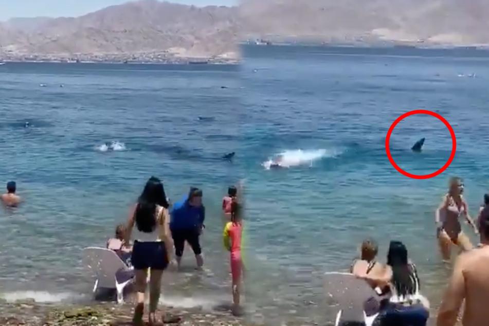 Schockierendes Video: Riesiger Hai schwimmt am Strand entlang, doch Urlauber baden einfach weiter