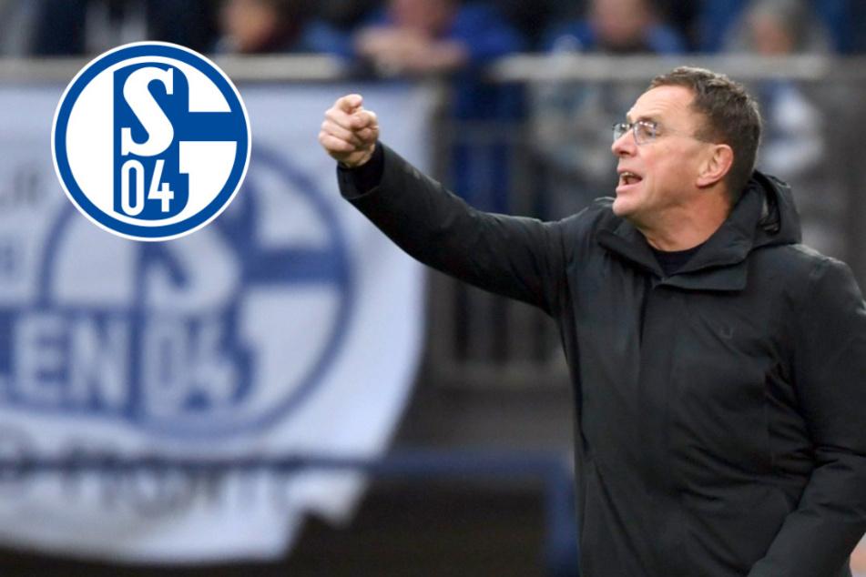 """RB-Macher Ralf Rangnick als Retter des FC Schalke 04? """"Fällt schwer, mir das vorzustellen!"""""""