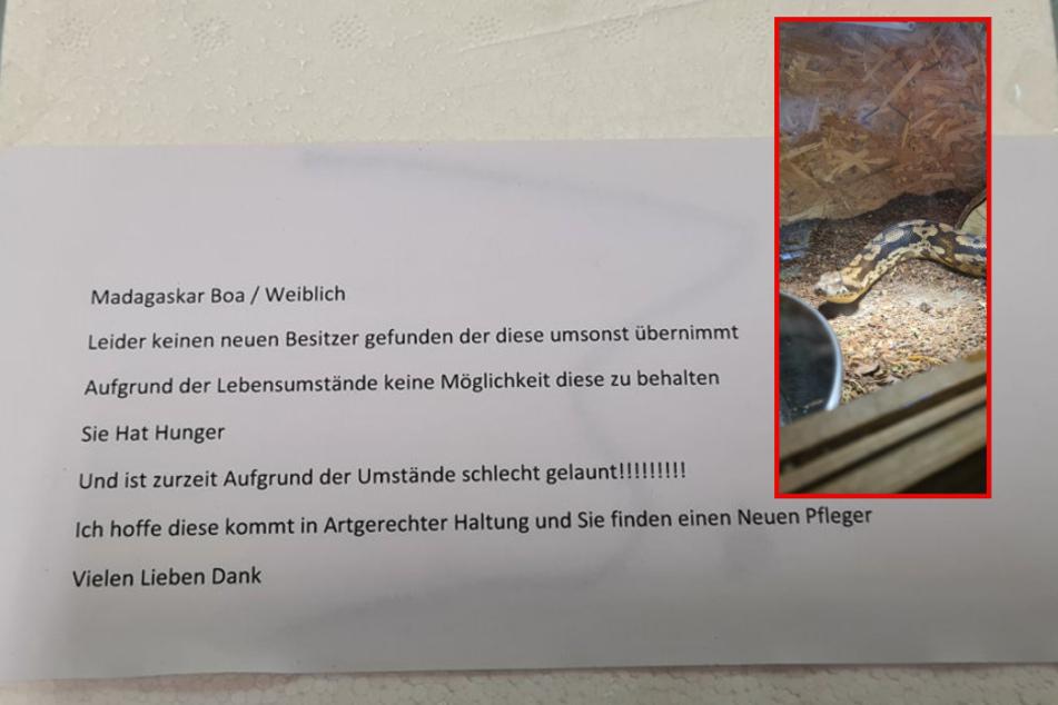 Die Fotomontage zeigt die in der Box verstaute Schlange sowie die auf der Styropor-Box angebrachte Botschaft.