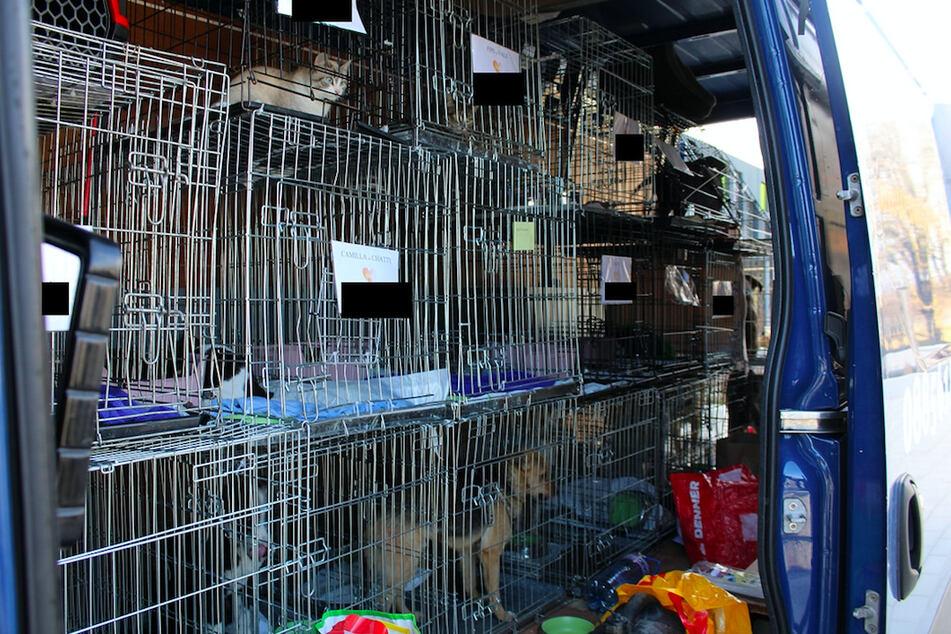 Diese Transporter mit zahlreichen Tierkäfigen wurde von der Polizei gestoppt.